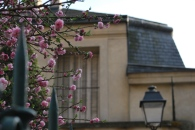 Pink in the Marais